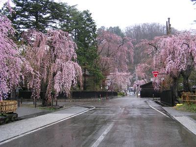 Sakura0103