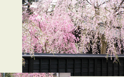 Sakura0104_3