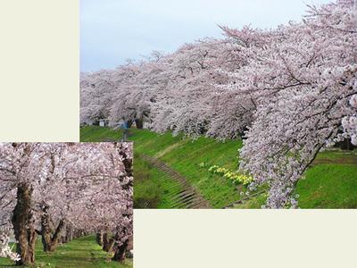 Sakura0202_2